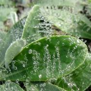 Mistdruppels op bladharen