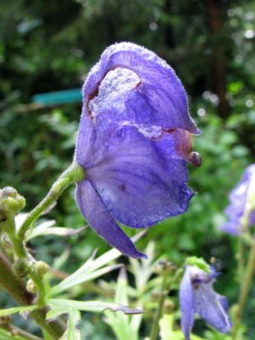 Krekeltje heeft ingebroken/-gevreten in de bloem