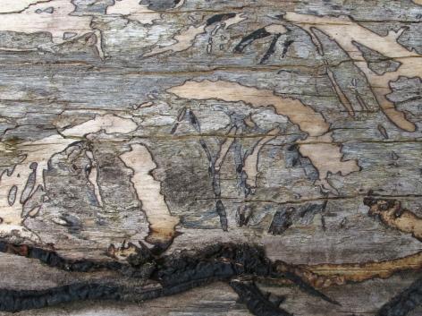 Onderin nog schimmelstrengen bij hun eigen houttekening