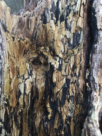 Dood hout met zwarte tekening van honingzwam