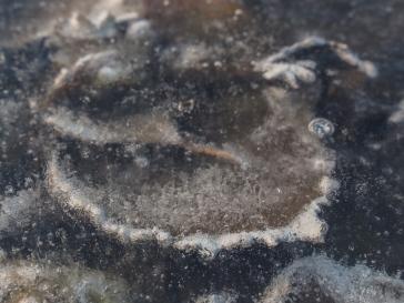 Bladeren in sloot: luchtbellen door het smelten